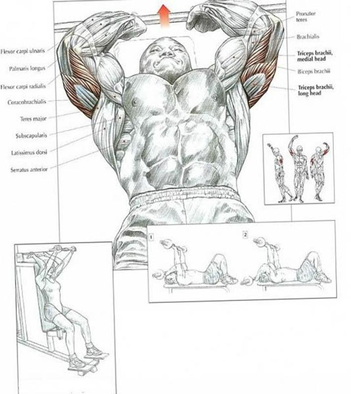 Tricep Workouts Apk Download Free Lifestyle App For Android