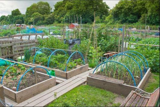 DIY vegetable garden screenshot 2