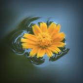 Slow flower Atom theme icon