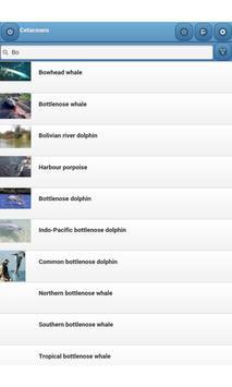 Cetaceans apk screenshot