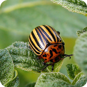 Insect pests icon