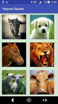 Animals Voices 2018 poster