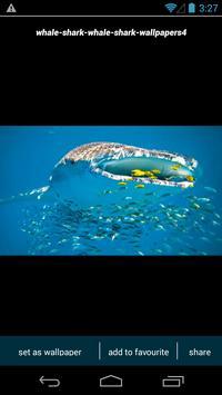 Whale Shark Wallpapers apk screenshot