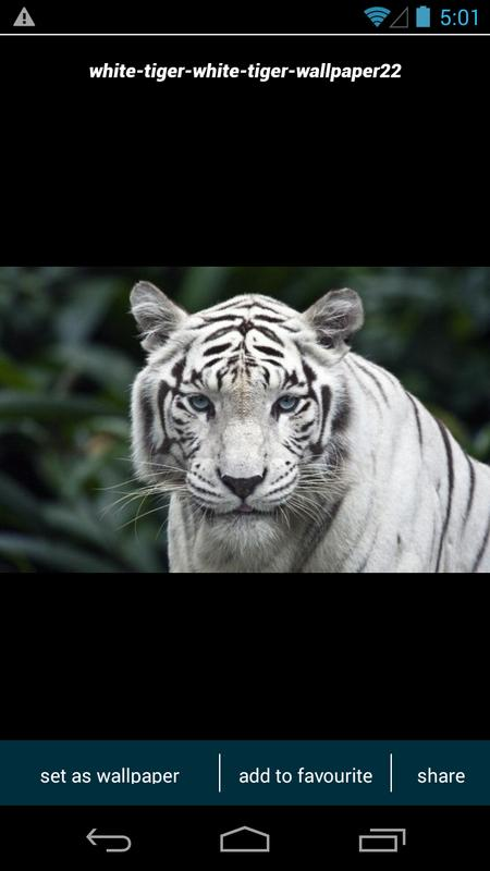 white tiger wallpapers apk download free personalization