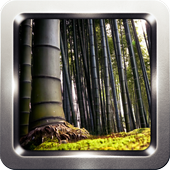 Bamboo Forest HD Wallpapers icon