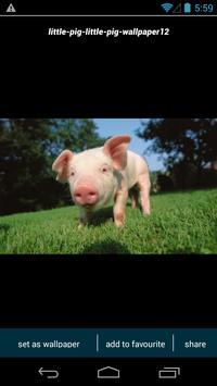 Cute Little Pig Wallpapers poster