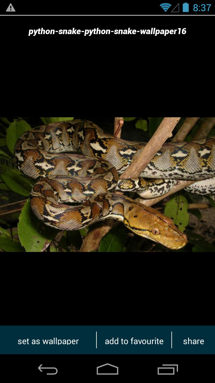 Python Snake Wallpapers For Android Apk Download