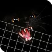 HD Beautifu Cute Kitty Tomcat Wallpapers - Kitten icon