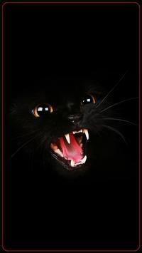 HD Beautifu Cute Kitty Tomcat Wallpapers - Kitten poster