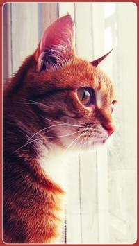 HD Beautifu Cute Kitty Tomcat Wallpapers - Kitten apk screenshot