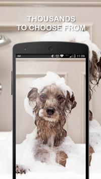 Dog Wallpapers screenshot 6