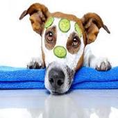 Dog Care Health icon
