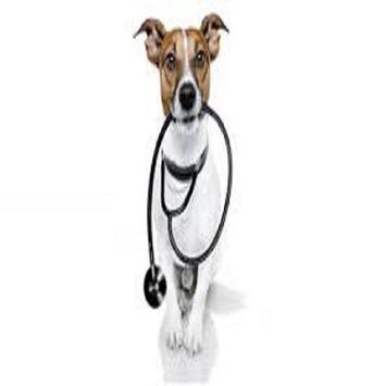 Dog Care Health screenshot 1
