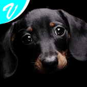 Dog wallpapers! icon