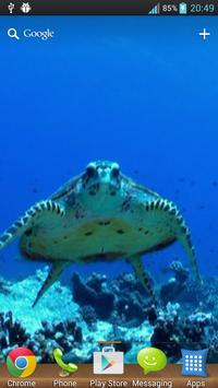 Wonderful Aquarium LWP poster