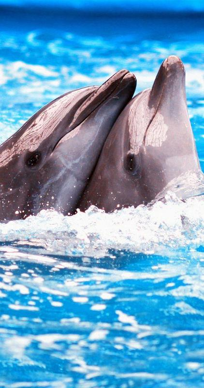 Dolphin Wallpapers 4k Ultrahd For Android Apk Download