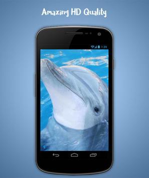 Dolphin Live Wallpaper screenshot 2