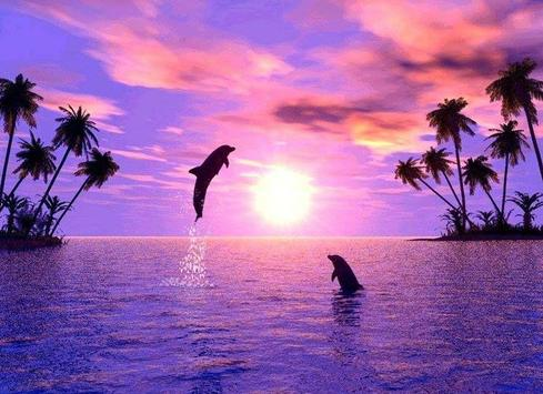 Dolphins Wallpaper For Android
