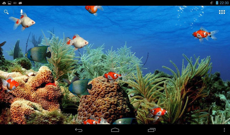 Aqu 225 Rio Free Live Wallpaper Para Android Apk Baixar