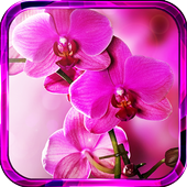 Orchide Spings live wallpaper icon