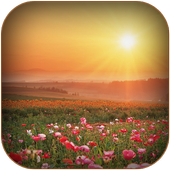Good Morning Wishes Images icon