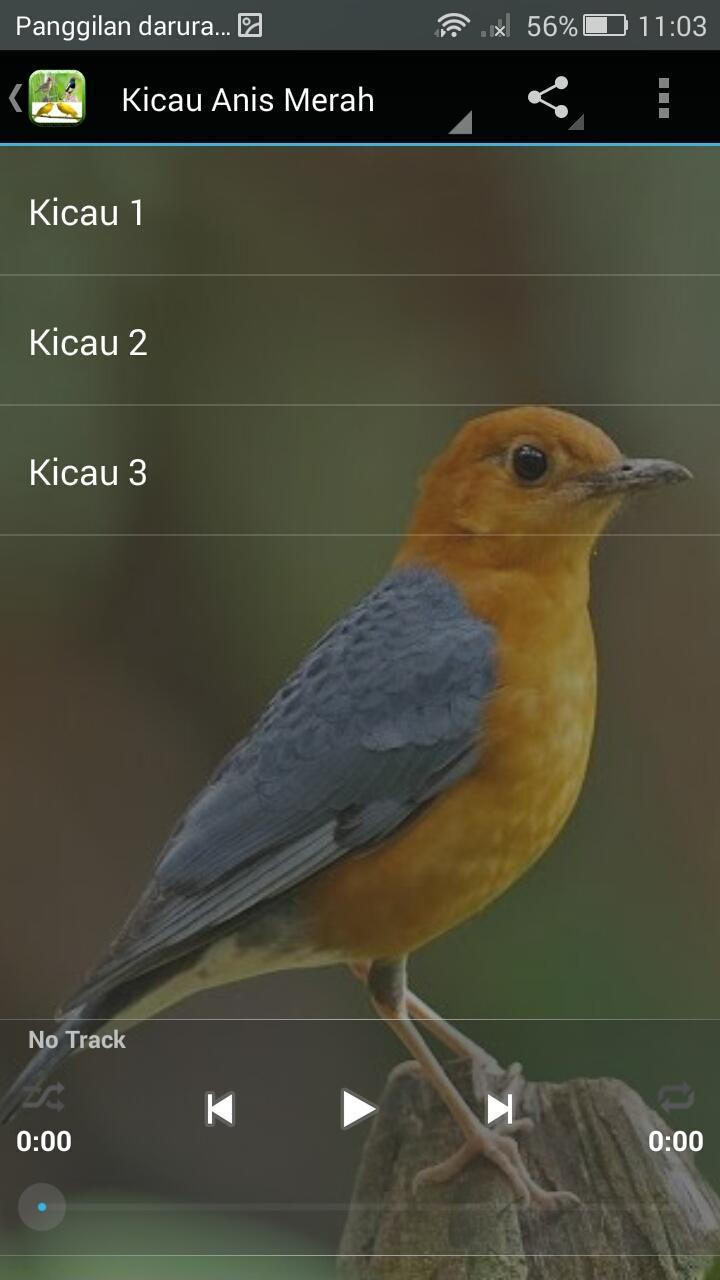 Kicau Burung Terpopuler For Android Apk Download