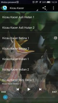 Kicau Kacer Lengkap apk screenshot