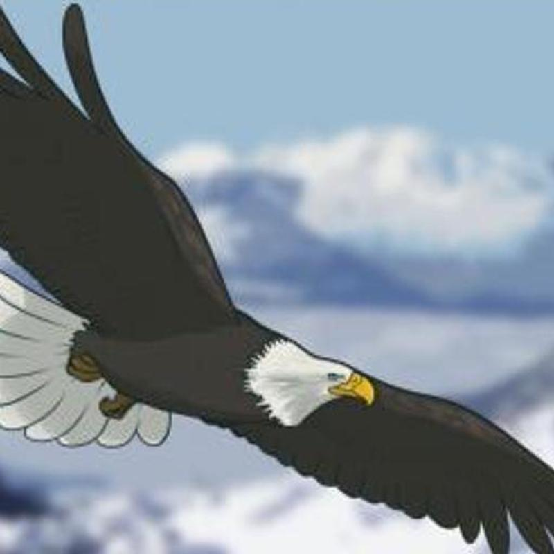 How To Draw Eagles APK Download - Free Art & Design APP for Android ...