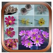 How to flower arrangement icon