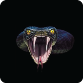 Snake Wallpaper Collection HD icon