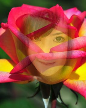 Beautiful Rose Flower Frame poster