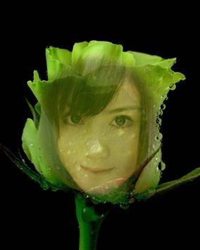 Beautiful Rose Flower Frame apk screenshot