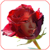 red rose frame transparent icon