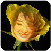 yellow rose flower frame icon