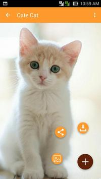 Cute Cat Wallpaper screenshot 2