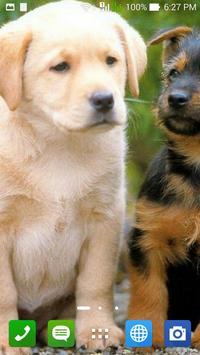 Dogs Wallpapers apk screenshot