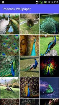 Peacock Wallpaper poster