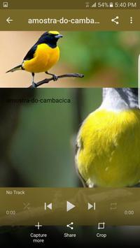 Canto de Cambacica Tui Tui screenshot 1
