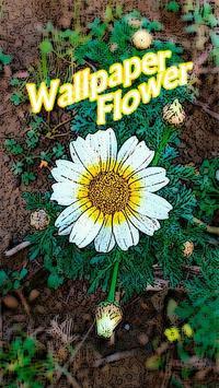 Wallpaper Flowers poster