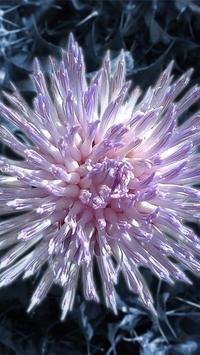 Wallpaper Flowers apk screenshot