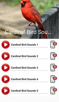Cardinal Bird Sounds poster