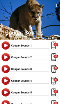 Cougar Sounds poster
