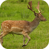 Deer Sounds icon