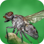 Fly Sounds icon