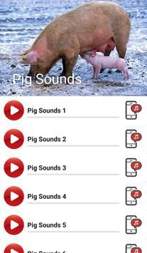 Pig Sounds apk screenshot