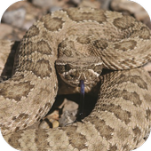 Rattlesnake Sounds icon