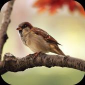 Sparrow Sounds icon