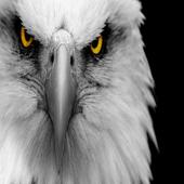 eagle Eyes Live Wallpaper icon