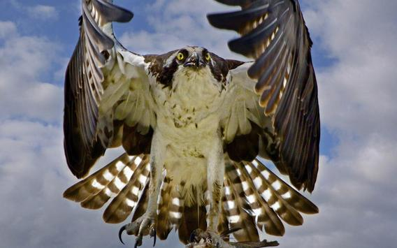 Eagle Wallpaper screenshot 6