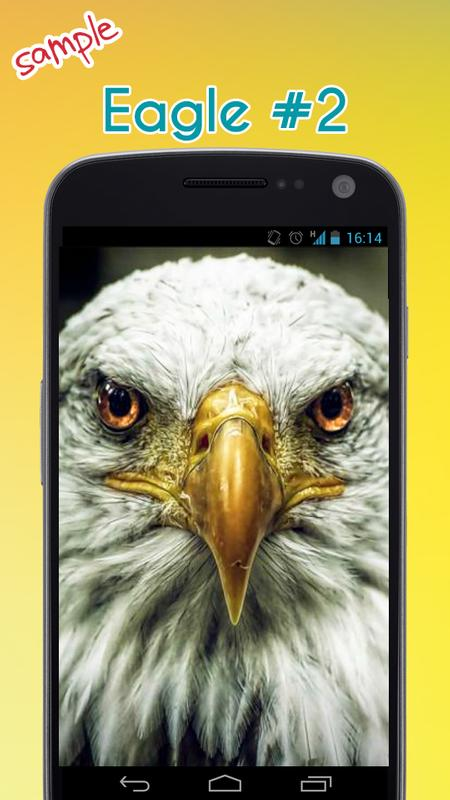 Eagle Wallpaper APK Download - Free Entertainment APP for Android ...